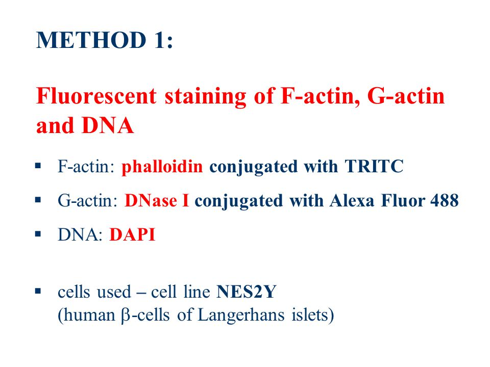 METHOD 1: Fluorescent staining of F-actin, G-actin and DNA  F-actin: phalloidin conjugated with TRITC  G-actin: DNase I conjugated with Alexa Fluor 488  DNA: DAPI  cells used – cell line NES2Y (human  -cells of Langerhans islets)