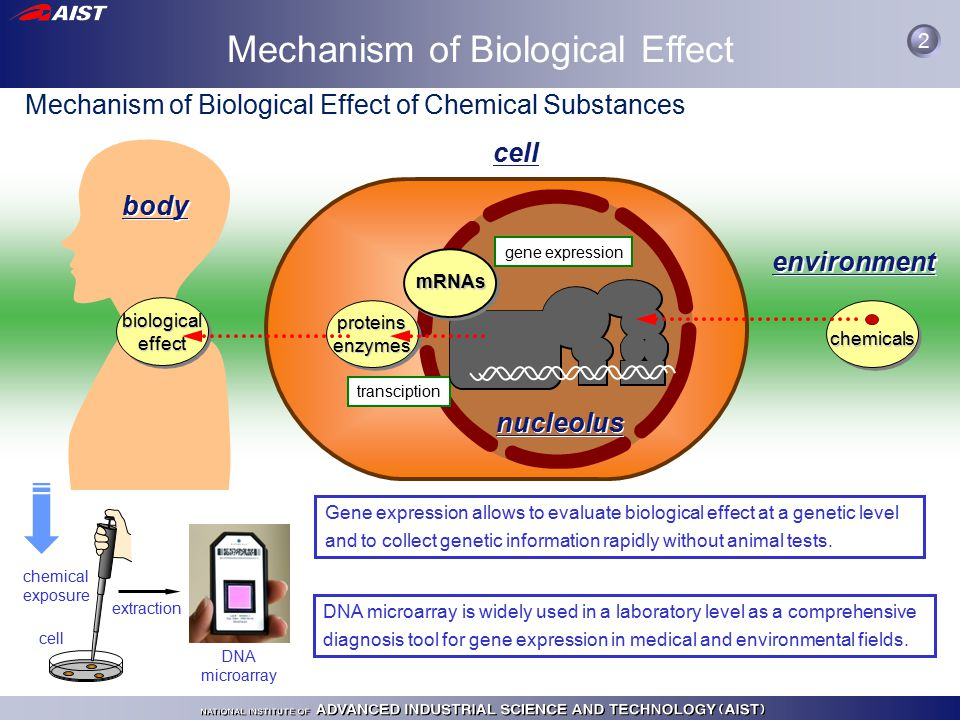 Mechanism of Biological Effect body cell environment nucleolus transciption biological effect chemicals gene expression proteinsenzymes Mechanism of Biological Effect of Chemical Substances Gene expression allows to evaluate biological effect at a genetic level and to collect genetic information rapidly without animal tests.