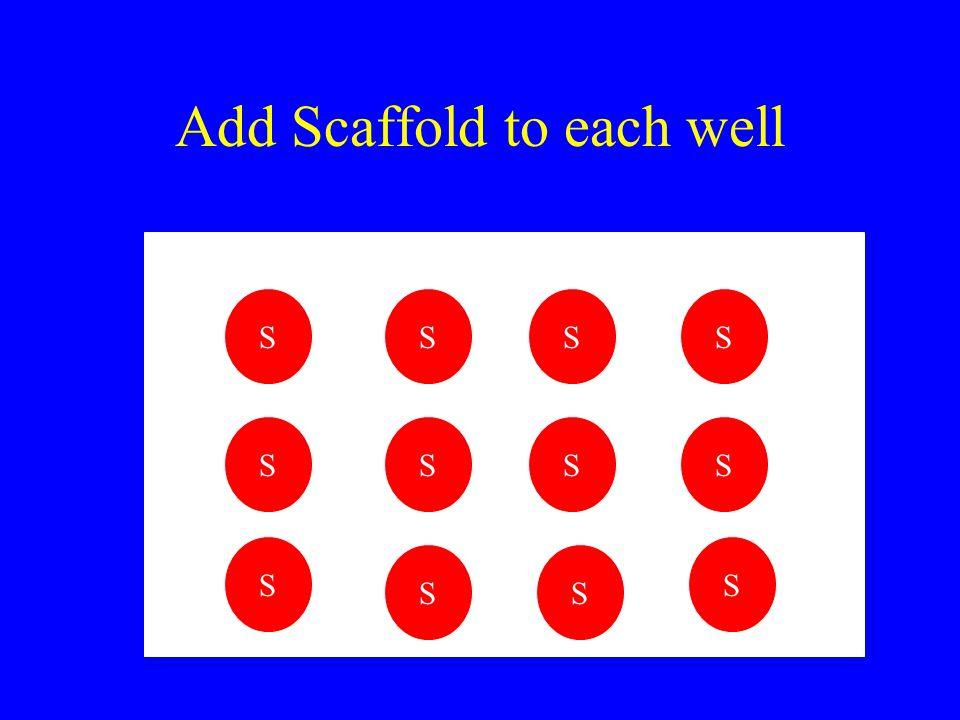 Add Scaffold to each well SS S S S S S S S S S S