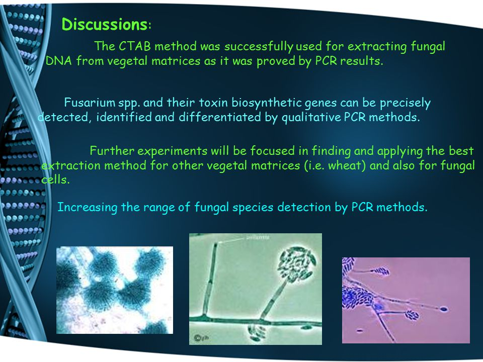 Discussions : The CTAB method was successfully used for extracting fungal DNA from vegetal matrices as it was proved by PCR results.
