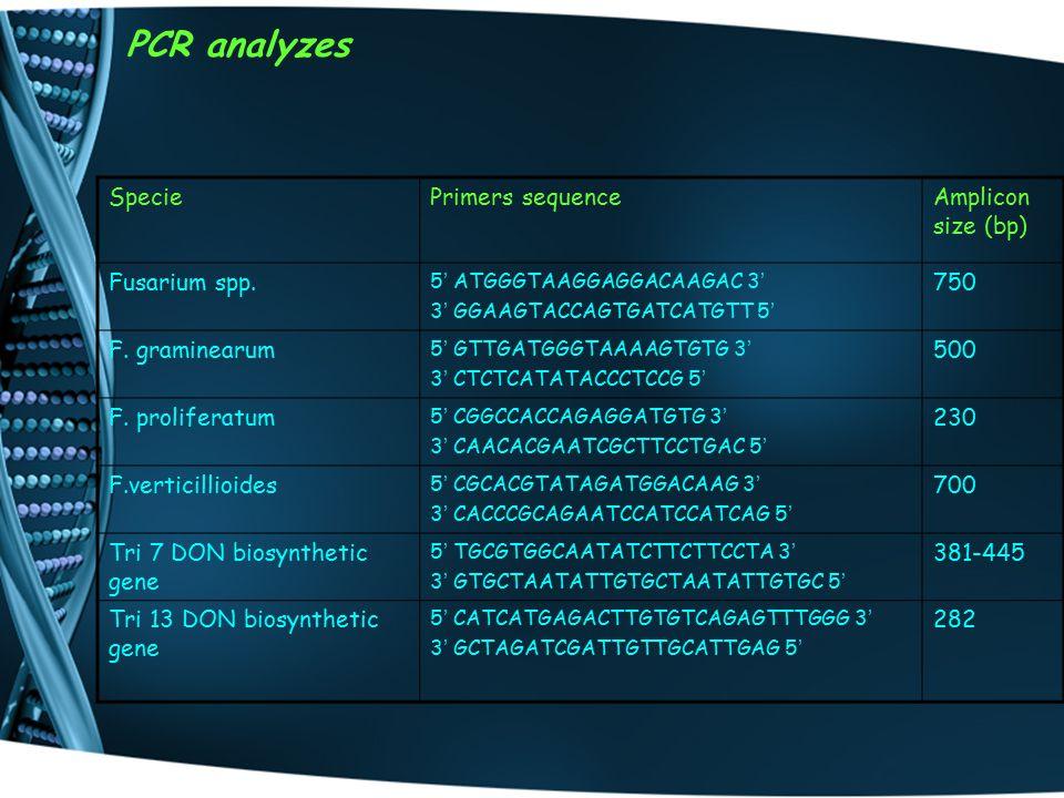 PCR analyzes SpeciePrimers sequenceAmplicon size (bp) Fusarium spp.