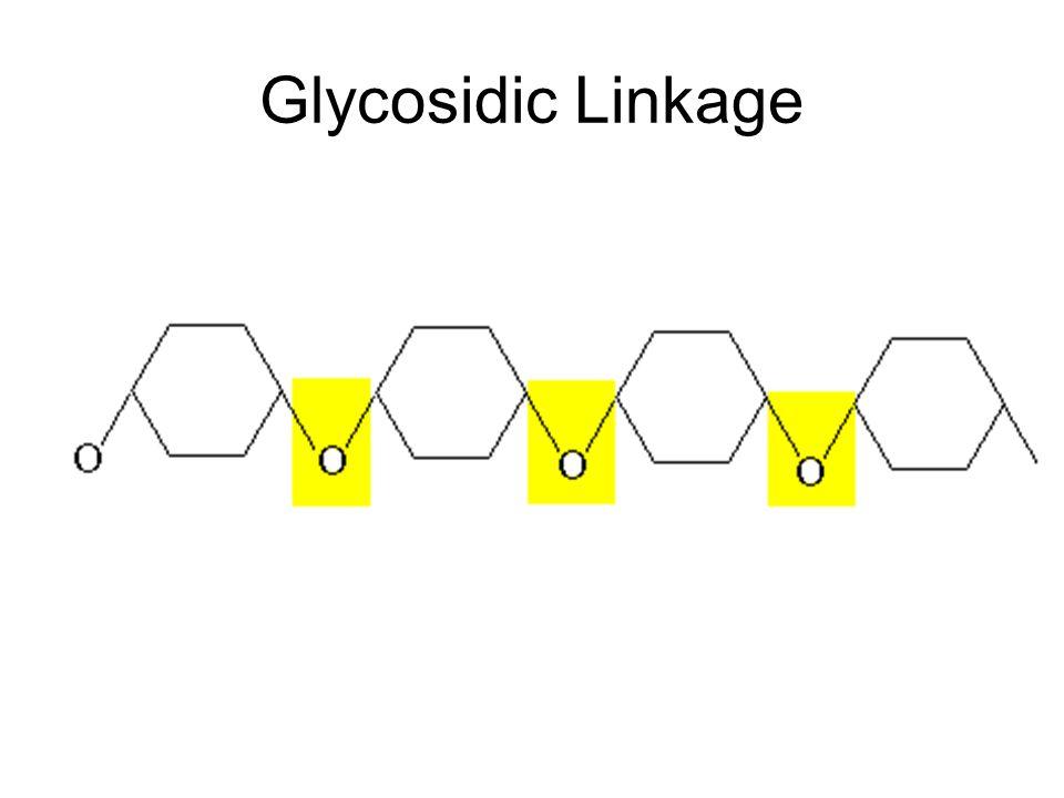 Glycosidic Linkage