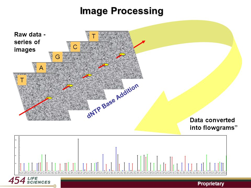 Proprietary Raw data - series of images dNTP Base Addition T A G C T Image Processing Data converted into flowgrams