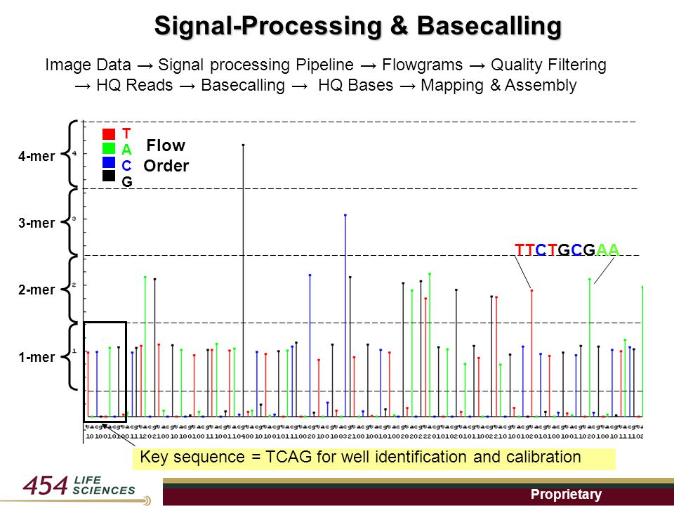 Proprietary Key sequence = TCAG for well identification and calibration TACGTACG Flow Order 1-mer 2-mer 3-mer 4-mer TTCTGCGAA Signal-Processing & Basecalling Image Data → Signal processing Pipeline → Flowgrams → Quality Filtering → HQ Reads → Basecalling → HQ Bases → Mapping & Assembly