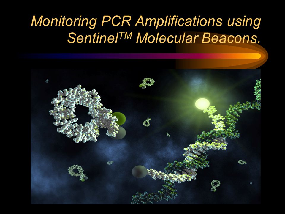 Monitoring PCR Amplifications using Sentinel TM Molecular Beacons.