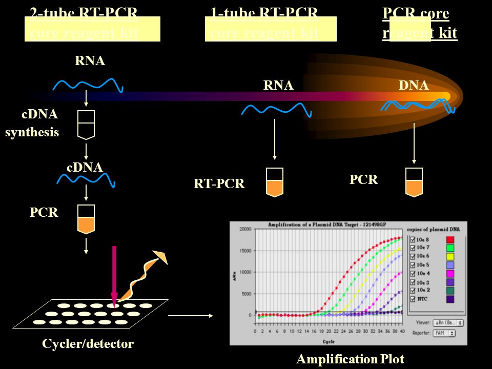 1-tube RT-PCR core reagent kit RNA DNA PCR RT-PCR Cycler/detector 2-tube RT-PCR core reagent kit PCR core reagent kit cDNA synthesis Amplification Plo