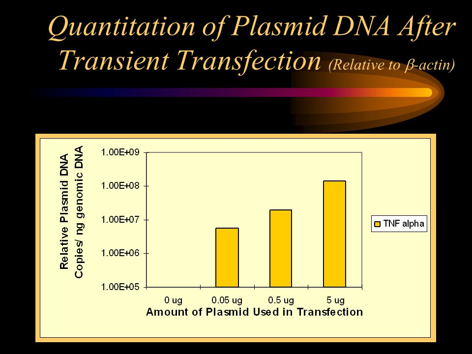 Quantitation of Plasmid DNA After Transient Transfection (Relative to  -actin)