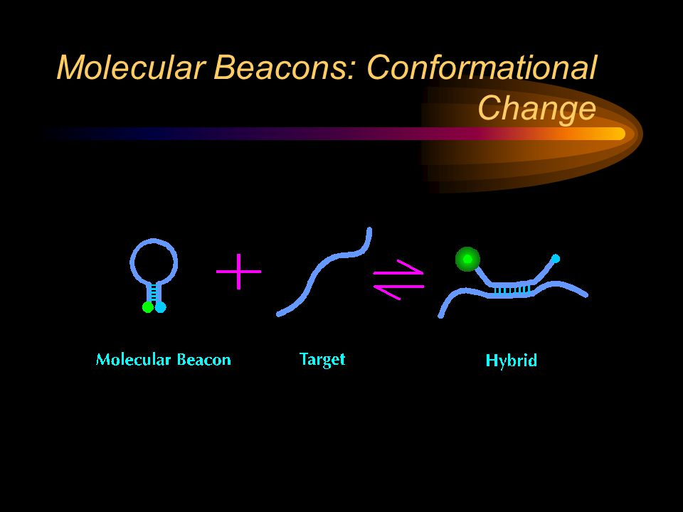 Molecular Beacons: Conformational Change
