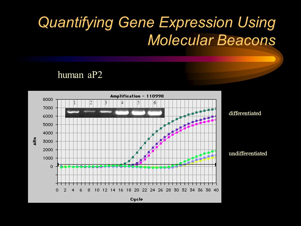 Quantifying Gene Expression Using Molecular Beacons human aP2 1 2 3 4 5 6 differentiated undifferentiated