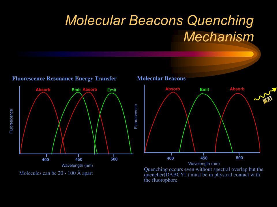 Molecular Beacons Quenching Mechanism