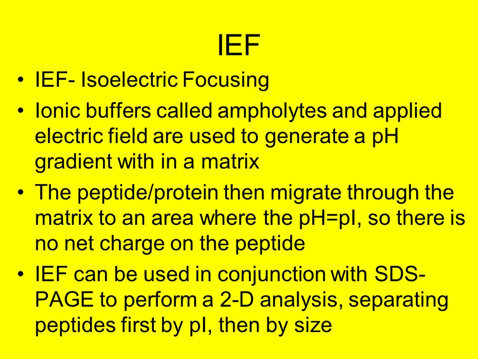 IEF IEF- Isoelectric Focusing Ionic buffers called ampholytes and applied electric field are used to generate a pH gradient with in a matrix The peptide/protein then migrate through the matrix to an area where the pH=pI, so there is no net charge on the peptide IEF can be used in conjunction with SDS- PAGE to perform a 2-D analysis, separating peptides first by pI, then by size