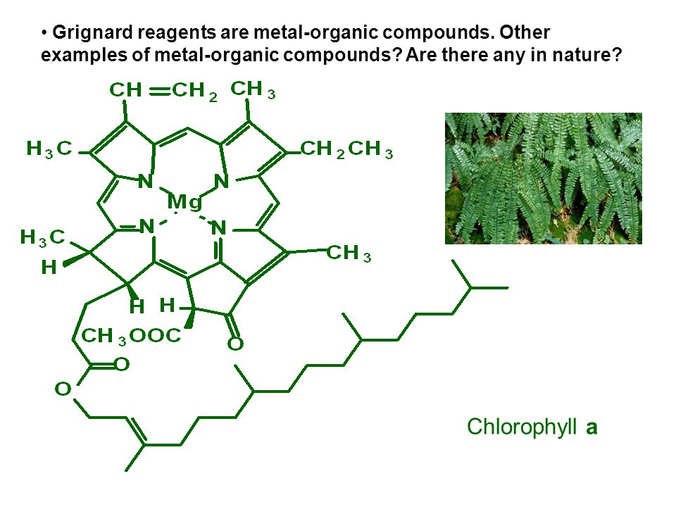 Chlorophyll a Grignard reagents are metal-organic compounds.