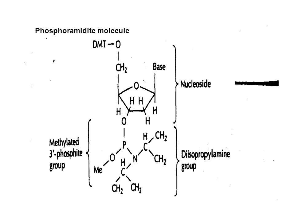 Phosphoramidite molecule