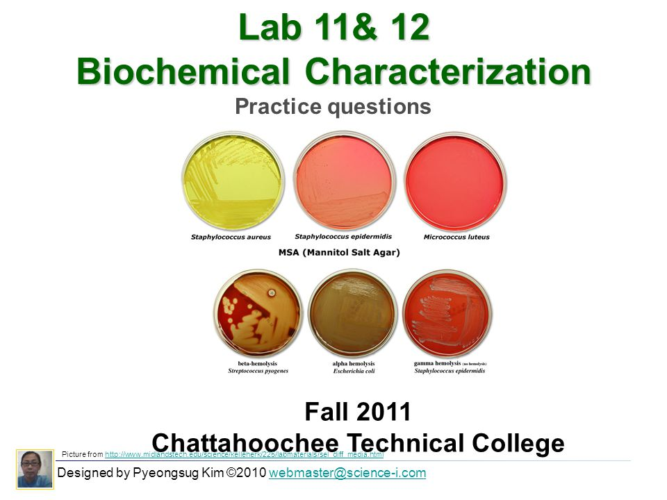 Lab 11& 12 Biochemical Characterization Practice questions Designed by Pyeongsug Kim ©2010 webmaster@science-i.comwebmaster@science-i.com Fall 2011 Chattahoochee Technical College Picture from http://www.midlandstech.edu/science/kelleherk/225/labmaterials/sel_diff_media.htmlhttp://www.midlandstech.edu/science/kelleherk/225/labmaterials/sel_diff_media.html