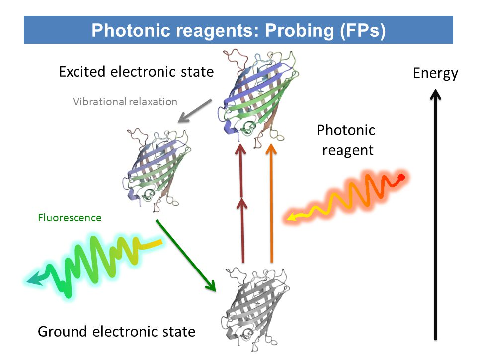 Photonic reagents: Control (Optogenetics) On state Off state Photonic reagents