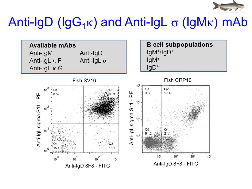 Anti-IgD (IgG 1  )  and Anti-IgL  (IgM  ) mAb Available mAbs Anti-IgM Anti-IgD Anti-IgL  FAnti-IgL  Anti-IgL  G B cell subpopulations IgM + /IgD + IgM + IgD +