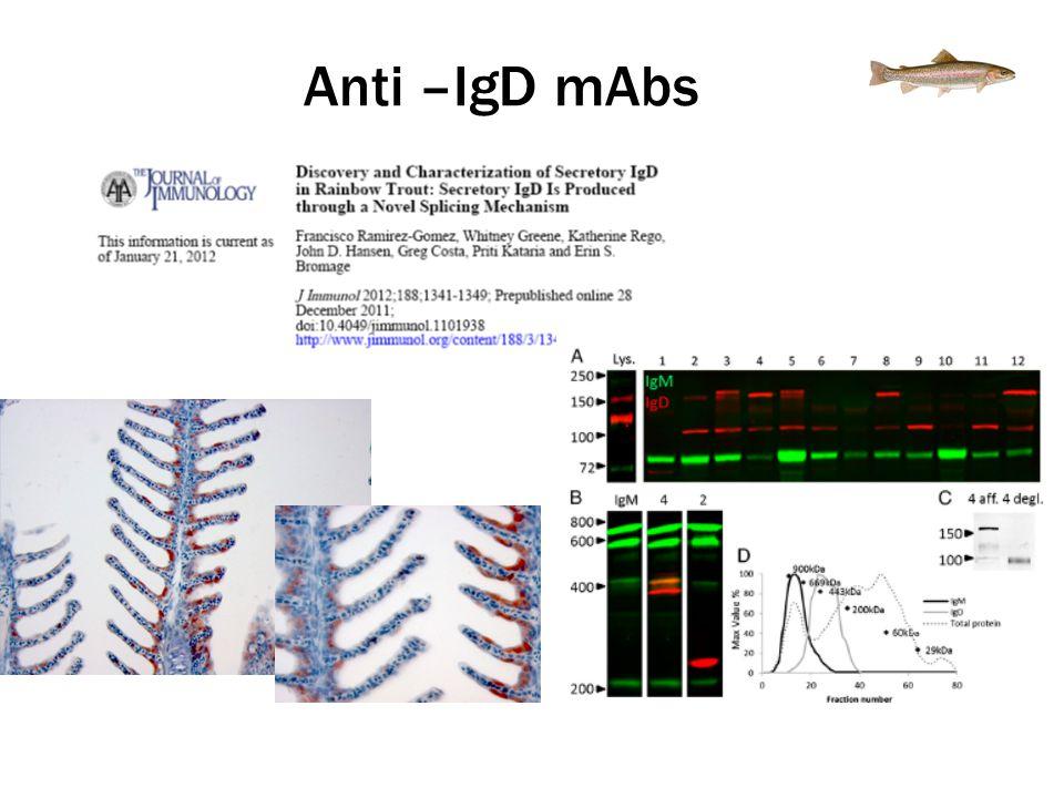 Anti –IgD mAbs
