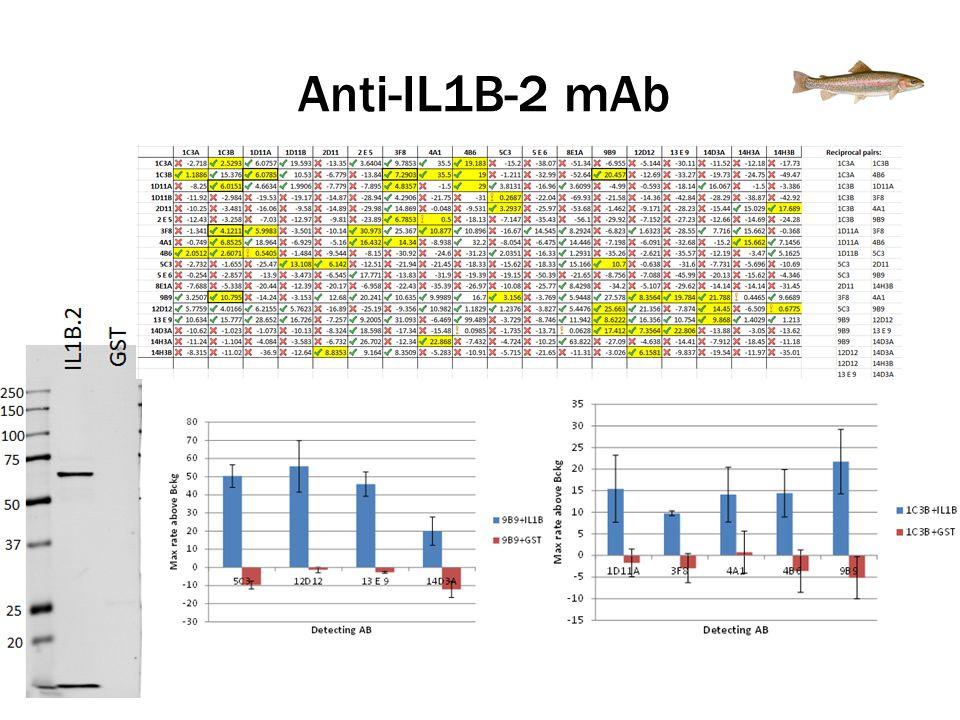 Anti-IL1B-2 mAb
