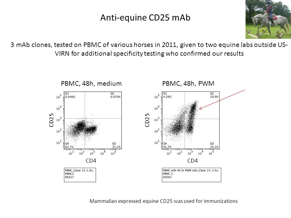 Anti-equine CD25 mAb PBMC, 48h, medium CD4 CD25 PBMC, 48h, PWM CD4 CD25 3 mAb clones, tested on PBMC of various horses in 2011, given to two equine labs outside US- VIRN for additional specificity testing who confirmed our results Mammalian expressed equine CD25 was used for immunizations