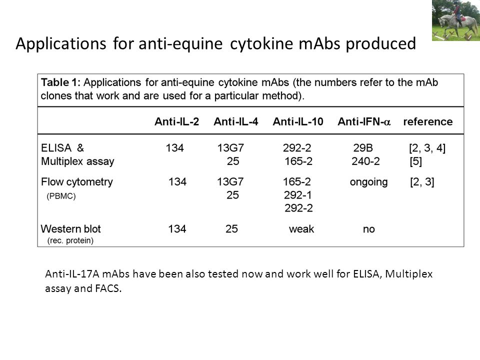 Applications for anti-equine cytokine mAbs produced Anti-IL-17A mAbs have been also tested now and work well for ELISA, Multiplex assay and FACS.