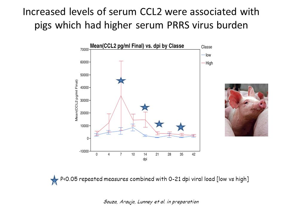 Increased levels of serum CCL2 were associated with pigs which had higher serum PRRS virus burden Souza, Araujo, Lunney et al.