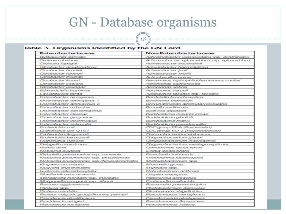 GN - Database organisms 18