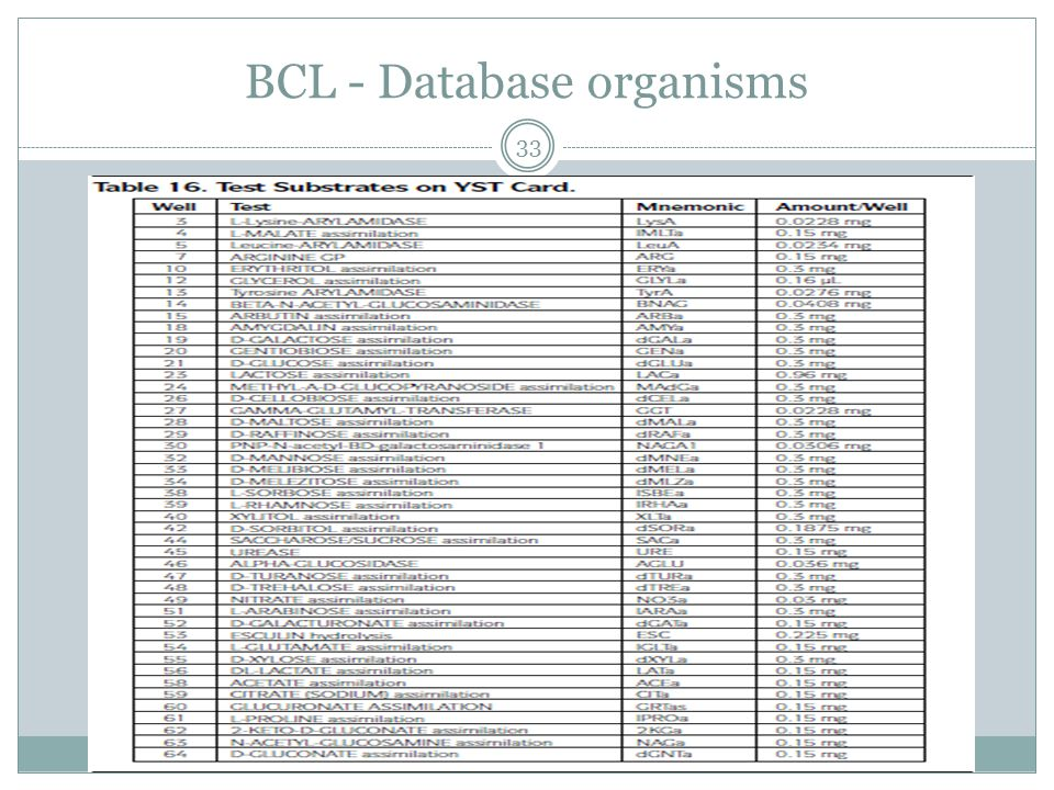 BCL - Database organisms 33
