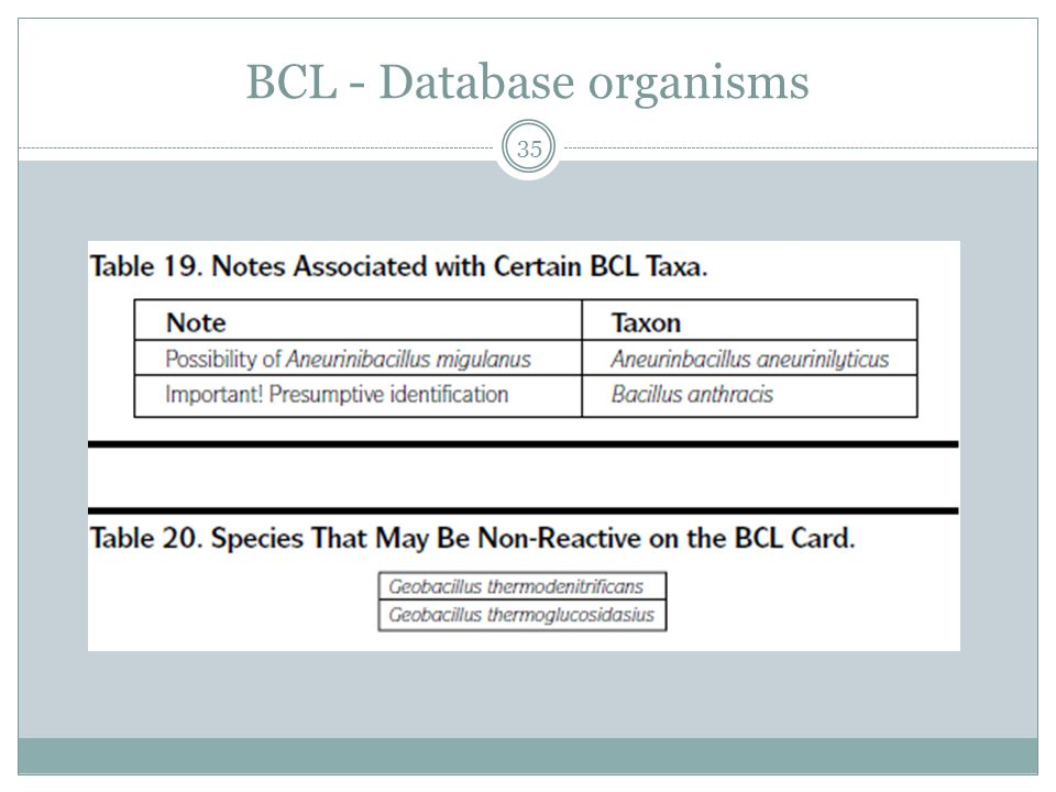 BCL - Database organisms 35