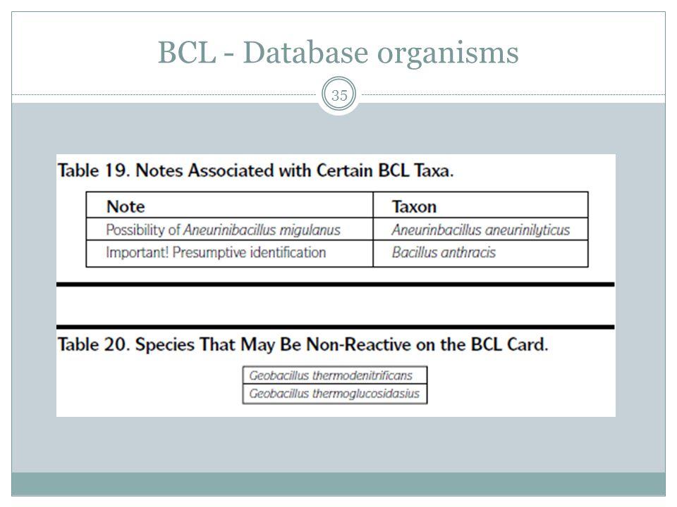 BCL - Database organisms 35