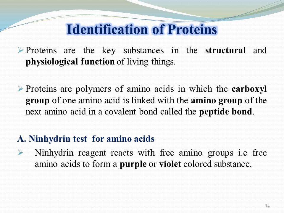  Proteins are the key substances in the structural and physiological function of living things.  Proteins are polymers of amino acids in which the c