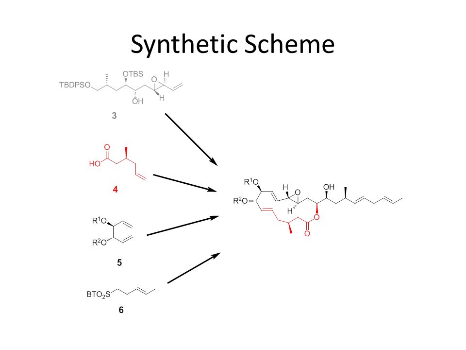 Synthetic Scheme