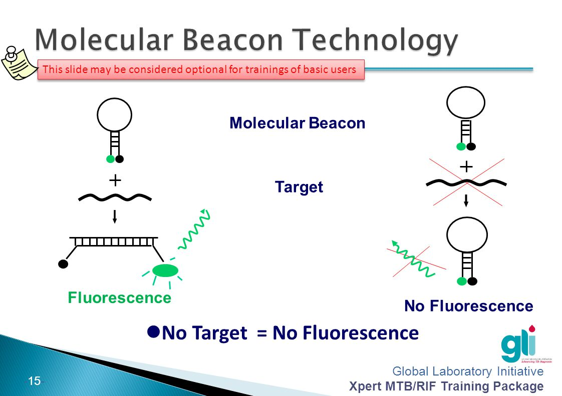 Global Laboratory Initiative Xpert MTB/RIF Training Package -15- Molecular Beacon Target Fluorescence No Fluorescence No Target = No Fluorescence This