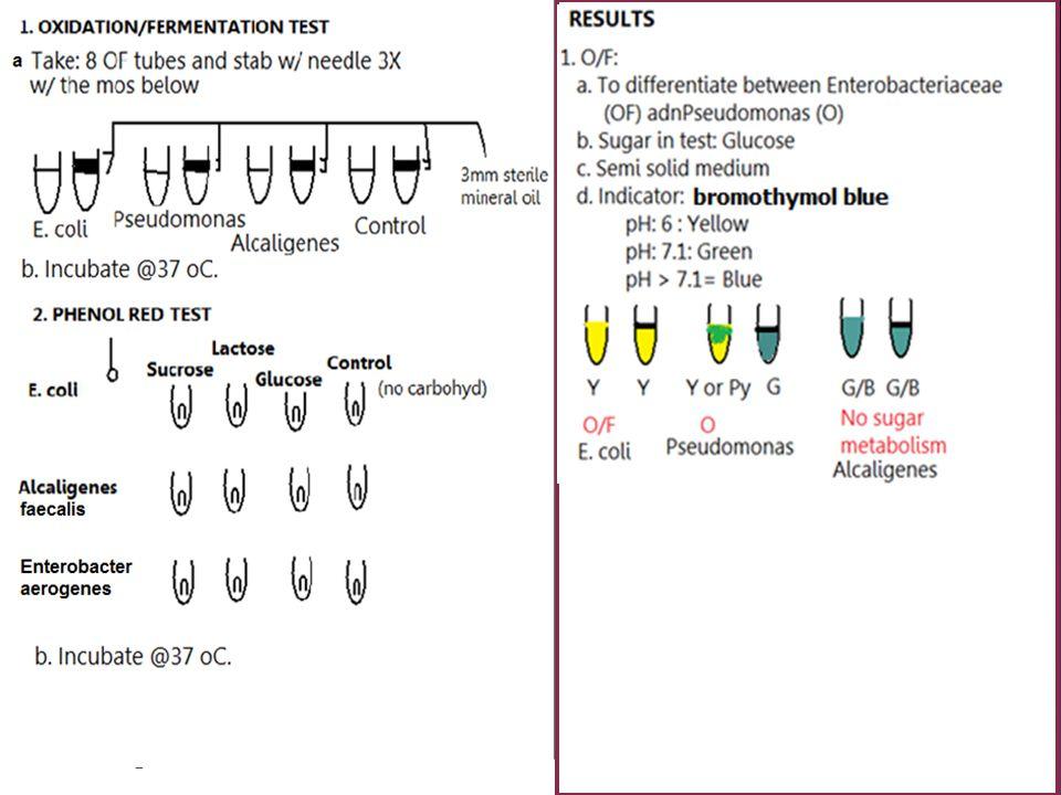 26 26. Strep. salivarius: (-) 23 Staph aureus: (+) 15 Micrococcus luteus : (+) Strep salivarius
