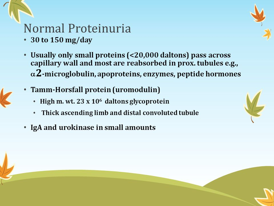 Normal Proteinuria 30 to 150 mg/day Usually only small proteins (<20,000 daltons) pass across capillary wall and most are reabsorbed in prox. tubules