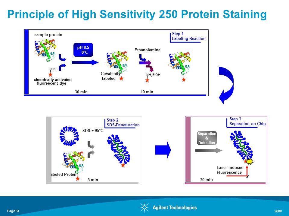 Page 54 2008 Principle of High Sensitivity 250 Protein Staining pH 8.5 0°C sample protein chemically activated fluorescent dye chemically activated Covalently labeled 30 min NHS NH 2 EtOH 10 min Ethanolamine Step 1 Labeling Reaction SDS + 95°C 5 min Step 2 SDS-Denaturation labeled Protein Separation & Detection Laser induced Fluorescence 30 min Step 3 Separation on Chip