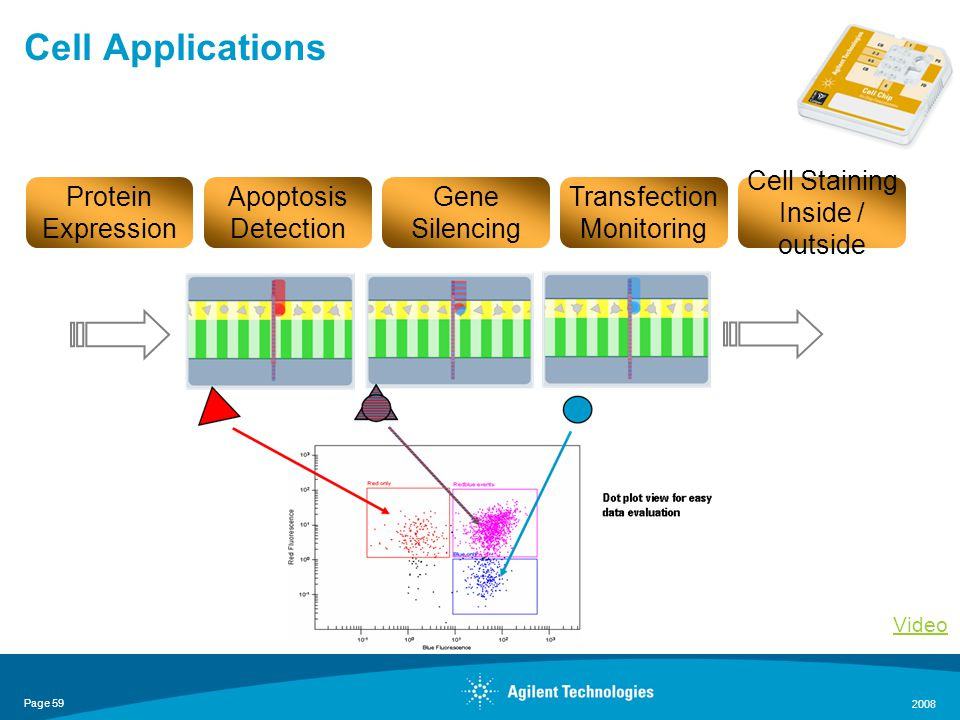 Page 59 2008 Cell Applications Protein Expression Transfection Monitoring Apoptosis Detection Gene Silencing Cell Staining Inside / outside Video