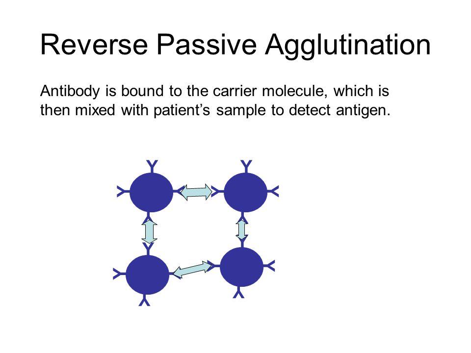 Reverse Passive Agglutination Antibody is bound to the carrier molecule, which is then mixed with patient's sample to detect antigen. Y Y Y Y Y Y Y Y