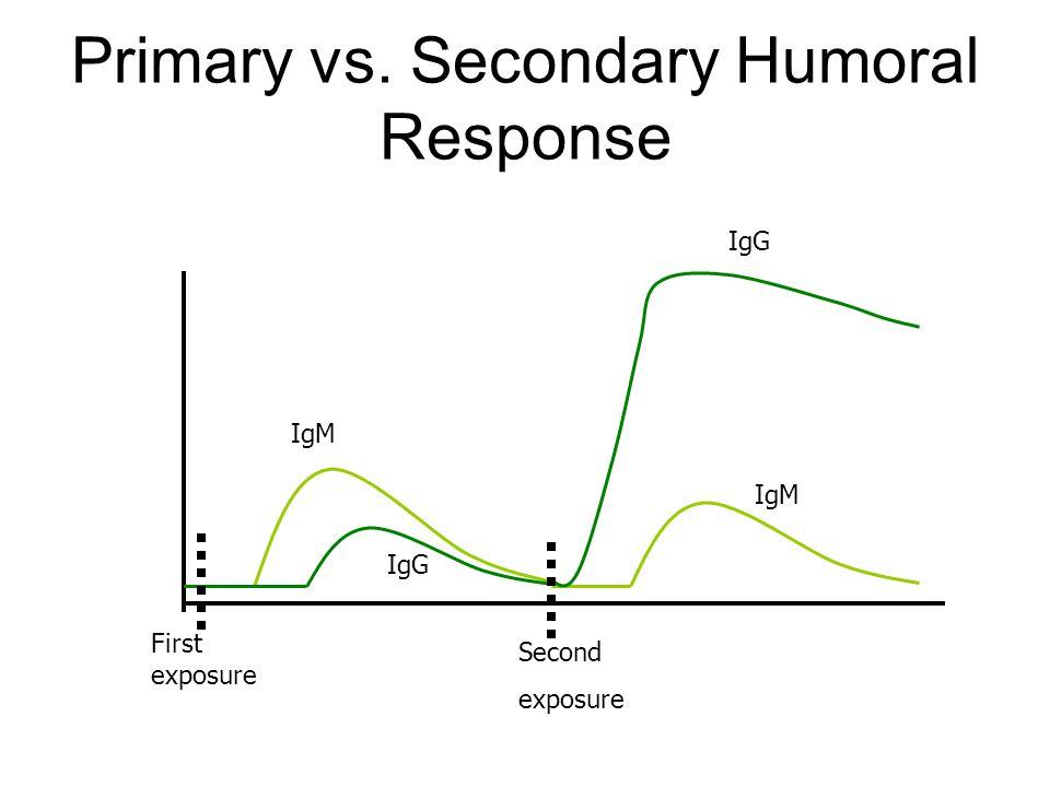 Primary vs. Secondary Humoral Response First exposure Second exposure IgM IgG