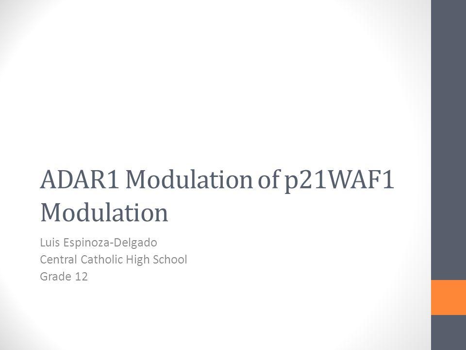 ADAR1 Modulation of p21WAF1 Modulation Luis Espinoza-Delgado Central Catholic High School Grade 12