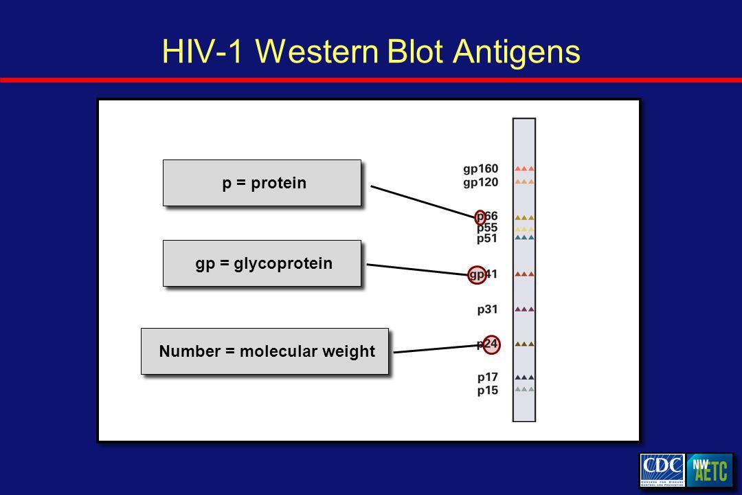 HIV-1 Western Blot Antigens p = protein gp = glycoprotein Number = molecular weight