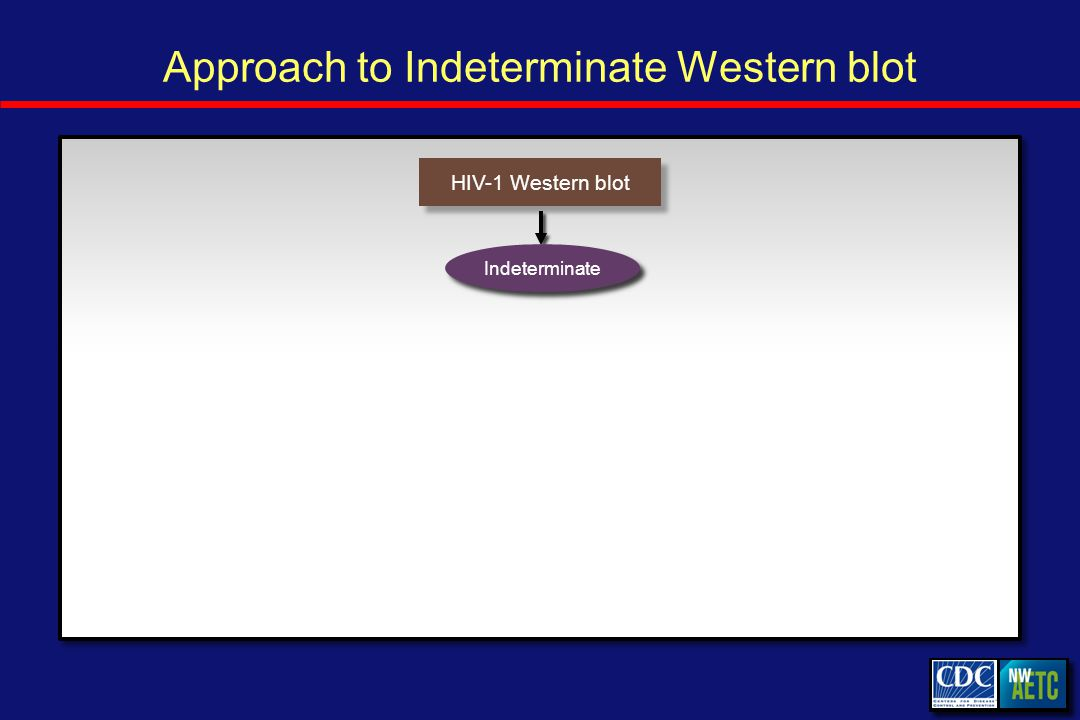 Approach to Indeterminate Western blot HIV-1 Western blot Indeterminate