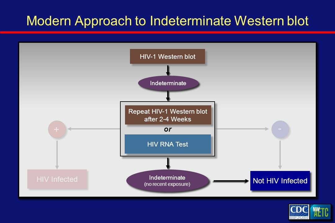 Modern Approach to Indeterminate Western blot HIV Infected - - + + HIV-1 Western blot Repeat HIV-1 Western blot after 2-4 Weeks HIV RNA Test or Indeterminate Not HIV Infected Indeterminate (no recent exposure)