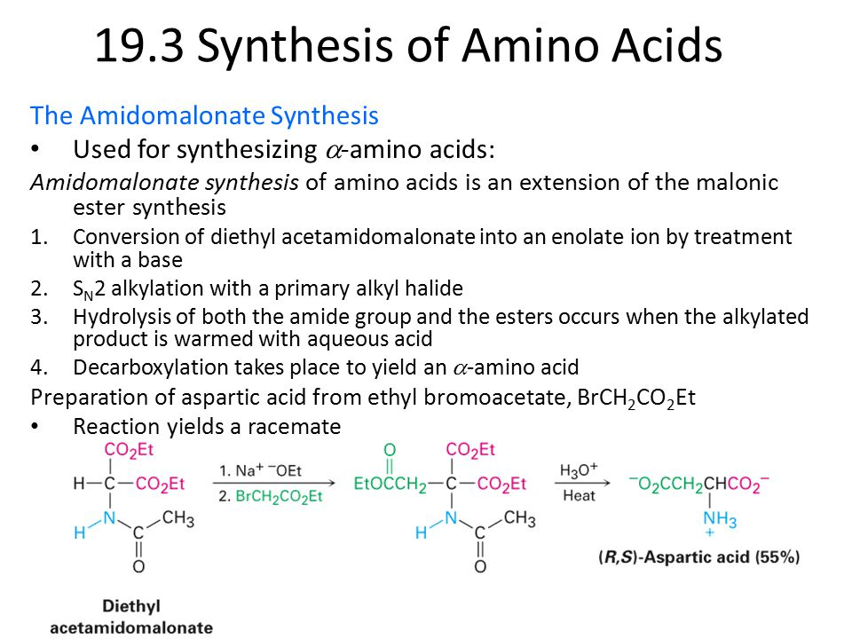 The Amidomalonate Synthesis Used for synthesizing  -amino acids: Amidomalonate synthesis of amino acids is an extension of the malonic ester synthesis 1.Conversion of diethyl acetamidomalonate into an enolate ion by treatment with a base 2.S N 2 alkylation with a primary alkyl halide 3.Hydrolysis of both the amide group and the esters occurs when the alkylated product is warmed with aqueous acid 4.Decarboxylation takes place to yield an  -amino acid Preparation of aspartic acid from ethyl bromoacetate, BrCH 2 CO 2 Et Reaction yields a racemate 19.3 Synthesis of Amino Acids