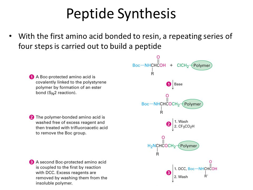 With the first amino acid bonded to resin, a repeating series of four steps is carried out to build a peptide Peptide Synthesis