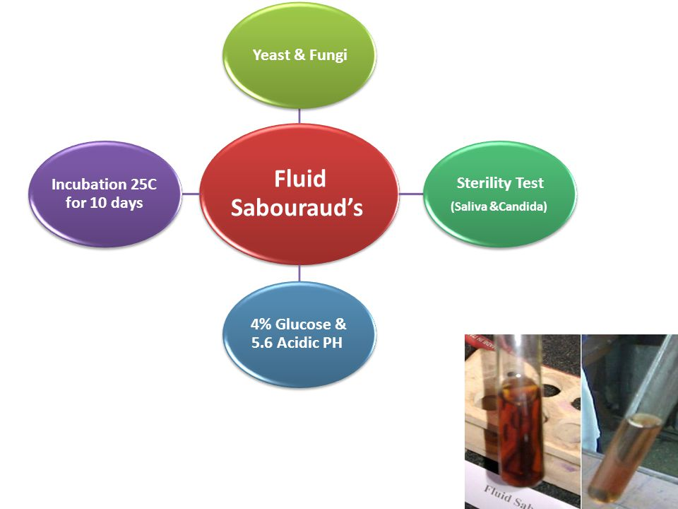 Fluid Sabouraud's Yeast & Fungi Sterility Test (Saliva &Candida) 4% Glucose & 5.6 Acidic PH Incubation 25C for 10 days