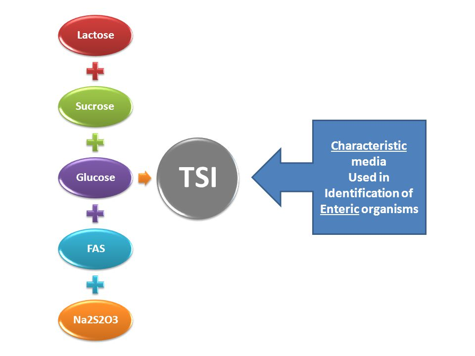 LactoseSucroseGlucoseFASNa2S2O3 TSI Characteristic media Used in Identification of Enteric organisms