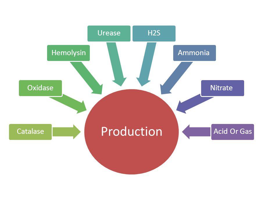 Production CatalaseOxidaseHemolysinUreaseH2SAmmoniaNitrateAcid Or Gas