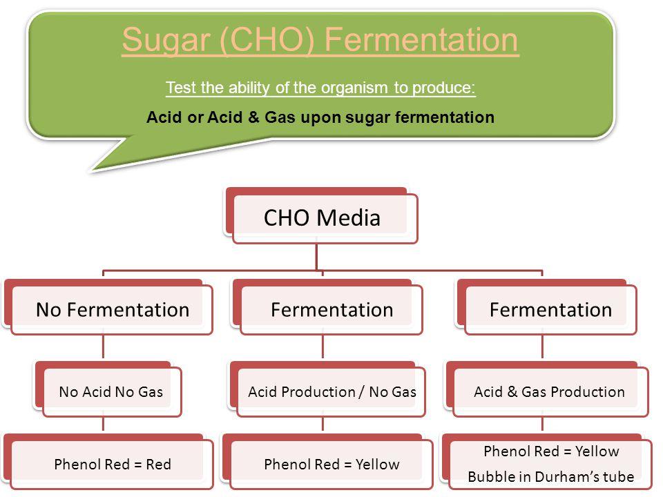 Sugar (CHO) Fermentation Test the ability of the organism to produce: Acid or Acid & Gas upon sugar fermentation Sugar (CHO) Fermentation Test the abi