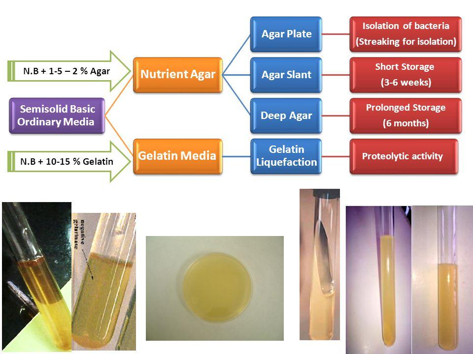 Semisolid Basic Ordinary Media Nutrient Agar Agar Plate Isolation of bacteria (Streaking for isolation) Agar Slant Short Storage (3-6 weeks) Deep Agar