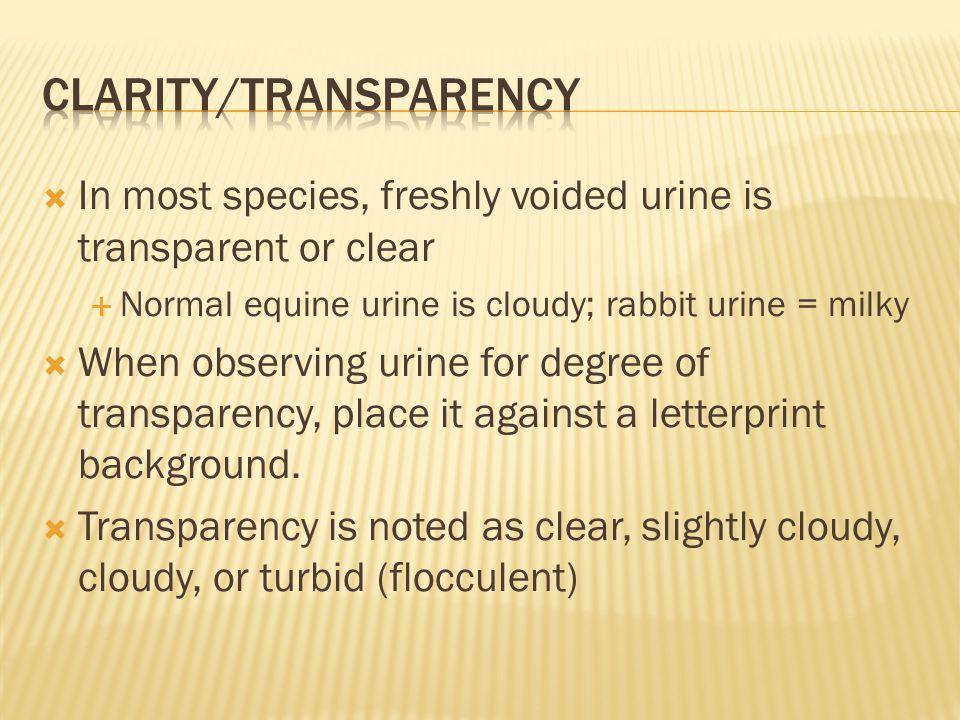  In most species, freshly voided urine is transparent or clear  Normal equine urine is cloudy; rabbit urine = milky  When observing urine for degre